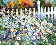 Shasta Daisies and Fence Two