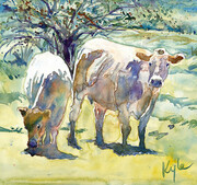 Lodge Road Cows -1